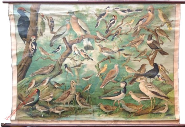 2 - 51 vogels